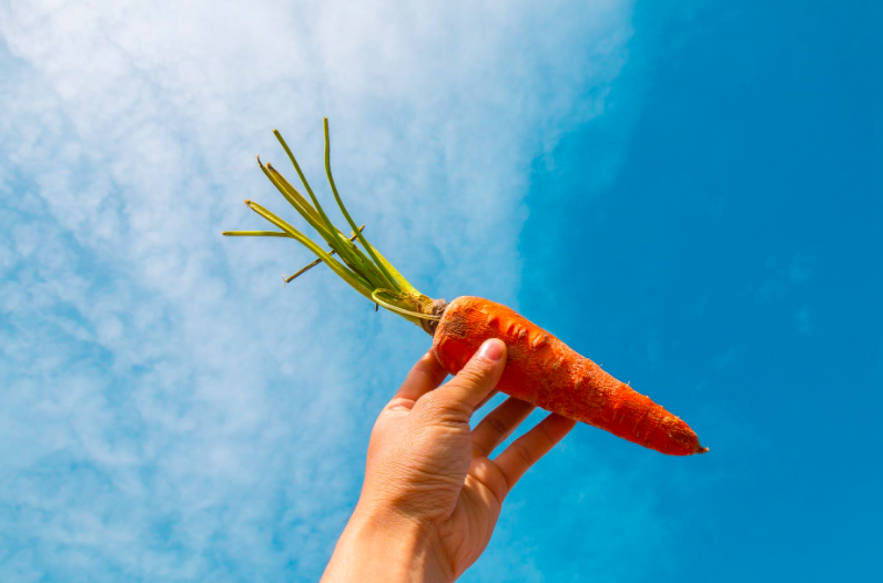 Po zjištění jak se může sklízet mrkev si již koupím trošku jiné balení